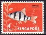 Singapour/Singapore 1962 - Série courante/Definitive, poisson/fish, 4c -YT 54 **